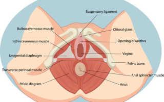 Кормление грудью месячные
