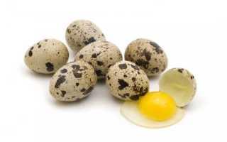 Когда можно давать перепелиное яйцо грудничку